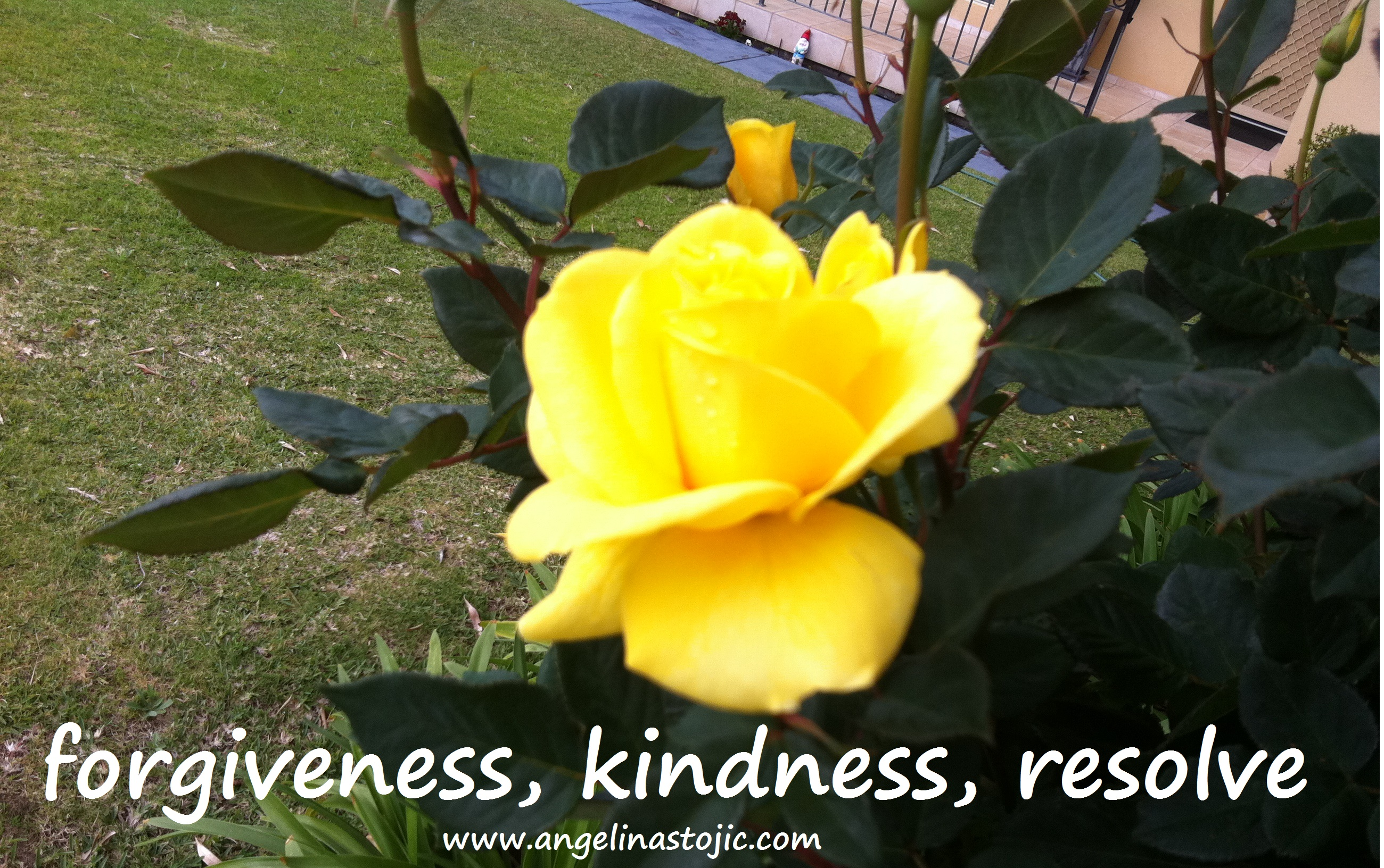 forgiveness kindness resolve