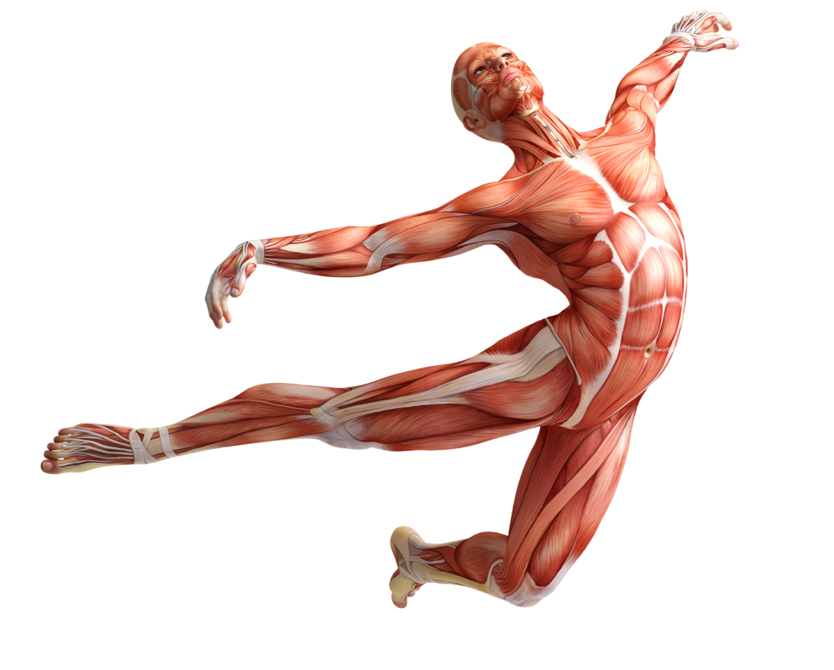 Ascension Energies Muscular System Changes Your Power Your Truth