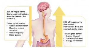 STomach Vargus Nerve