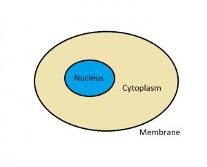 cell basic