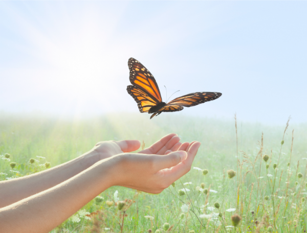 Butterfly Letting Go